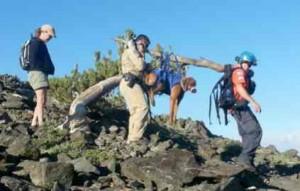 tahoe dog rescue